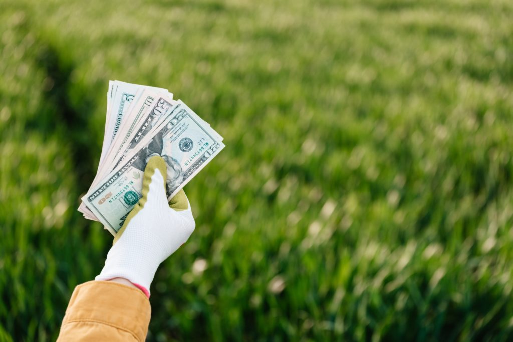 Hand with cloves holds money over field of grass
